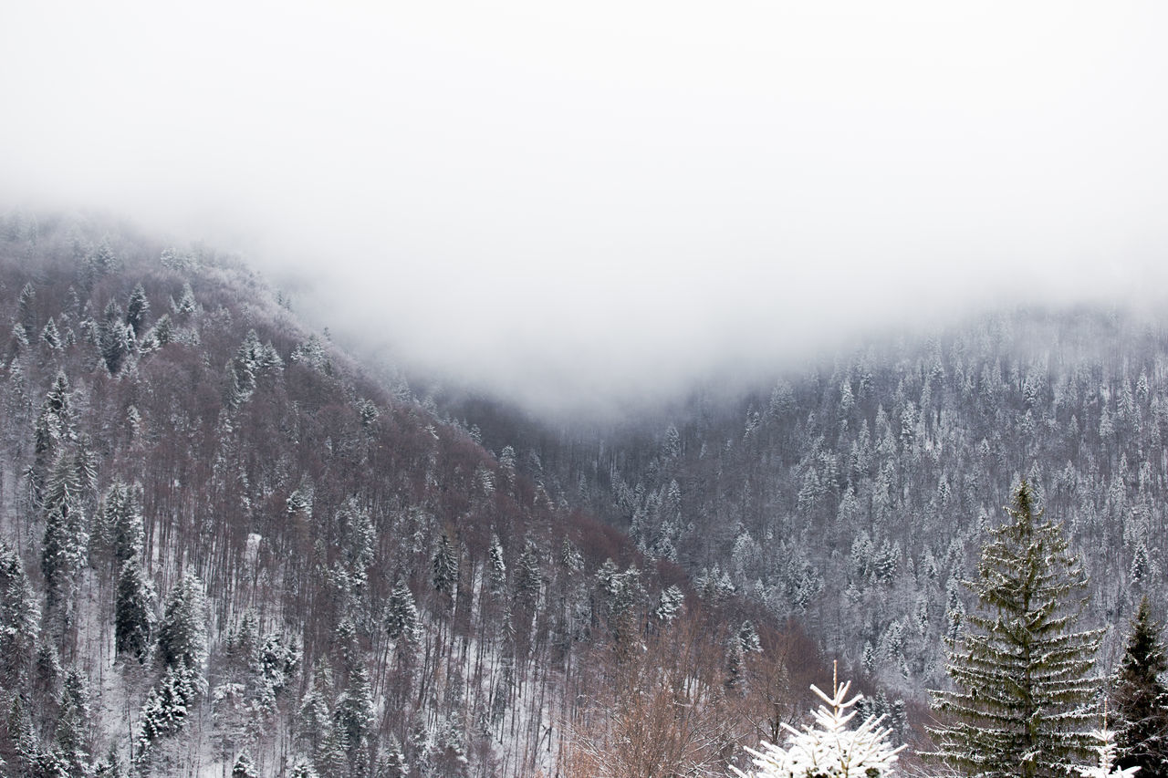 Beauty In Nature Cold Temperature Fog Foggy Foggy Morning Forest Green Landscape Landscape_Collection Mountain Nature No People Outdoors Pinaceae Pine Pine Tree Pine Woodland Scenics Sky Snow Snowing Tranquil Scene Tranquility Tree Winter