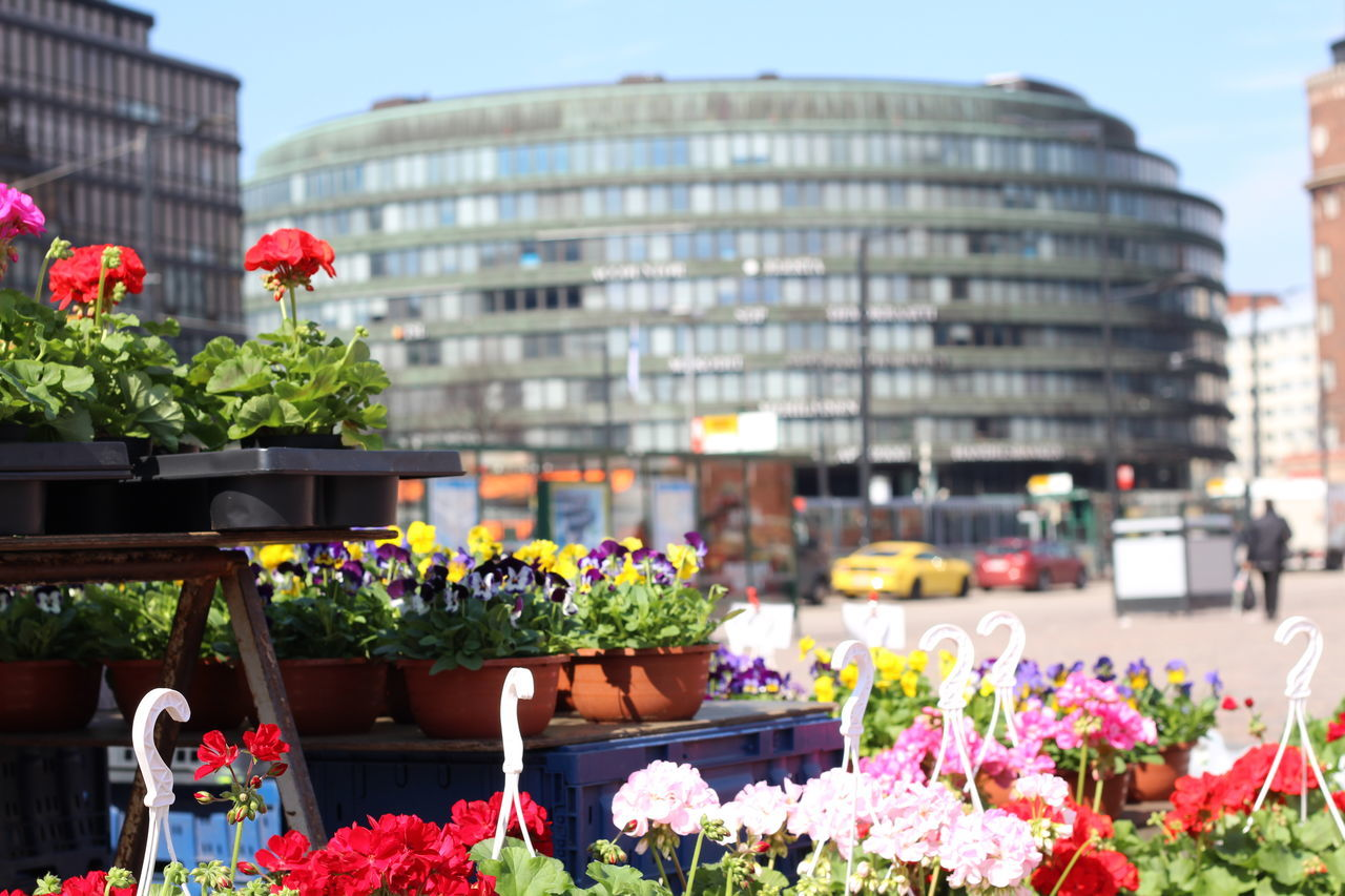 Pictures taken at Hakaniemi Market Hall, no editing, no touching. April 2016 Architecture Blooming Built Structure City FIN Finnish Spring Flower Flower Shop Focus On Foreground Fragility Freshness Upclose Street Photography Hakaniemen Kauppahalli Hakaniemi Hakaniemi Market Hall Hakaniemi Tori Helsinki Nature Petal Pink Color Plant Potted Plant Spring Flowers The Shop Around The Corner