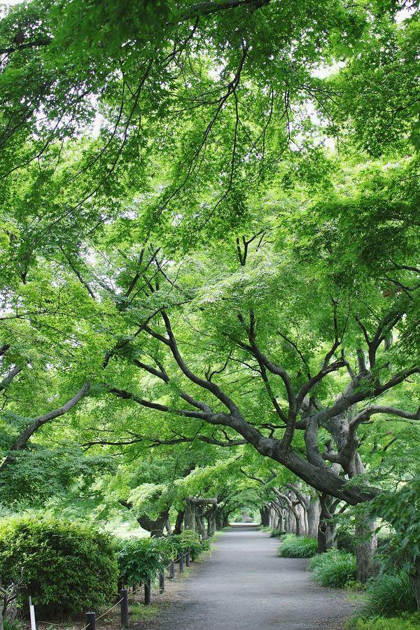 小石川植物園 Relaxing Enjoying Life Green Nature Tree_collection  Hello World Japan Photography Eye Em Nature Lover Tunnel