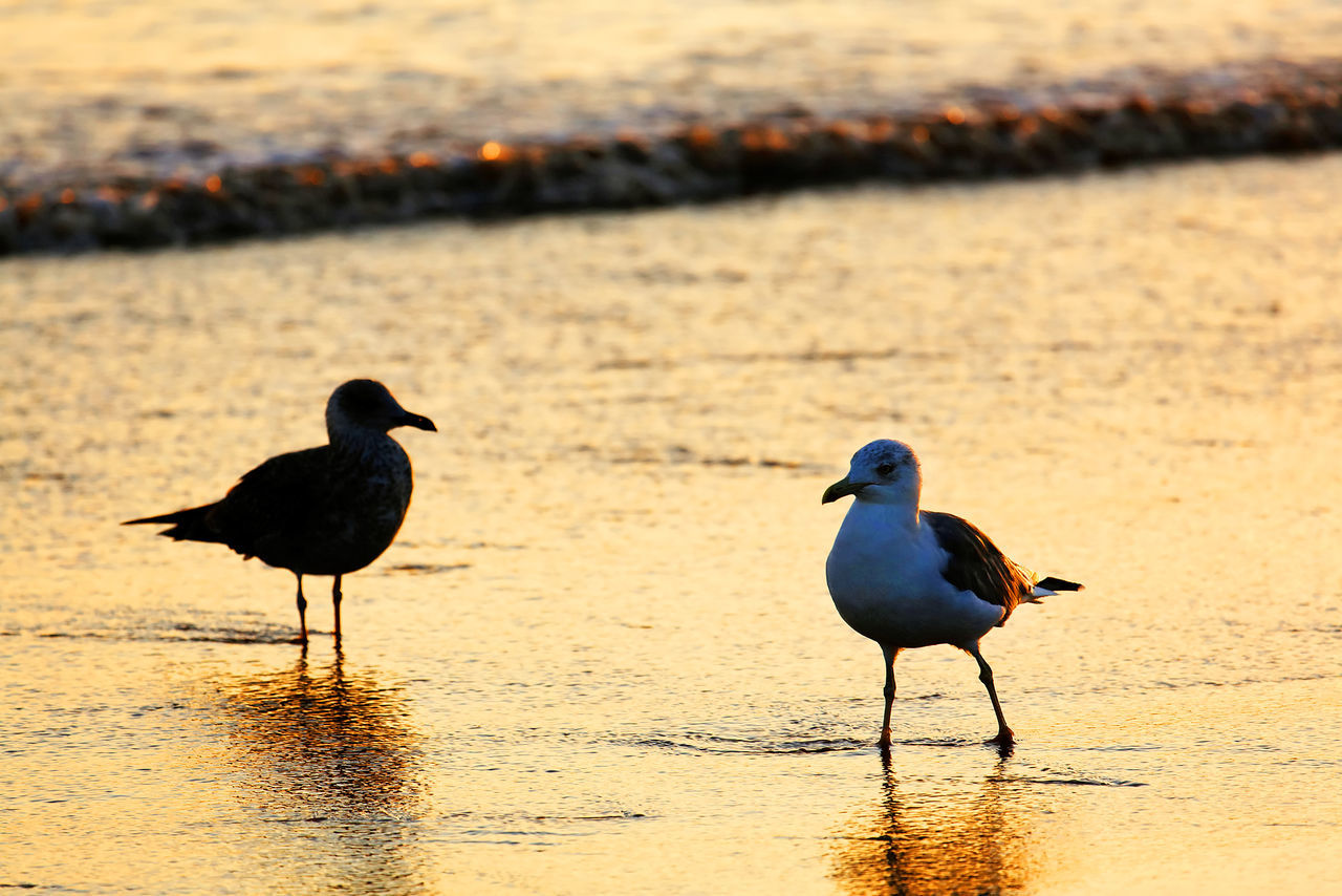 Seagulls Perching On Shore At Beach