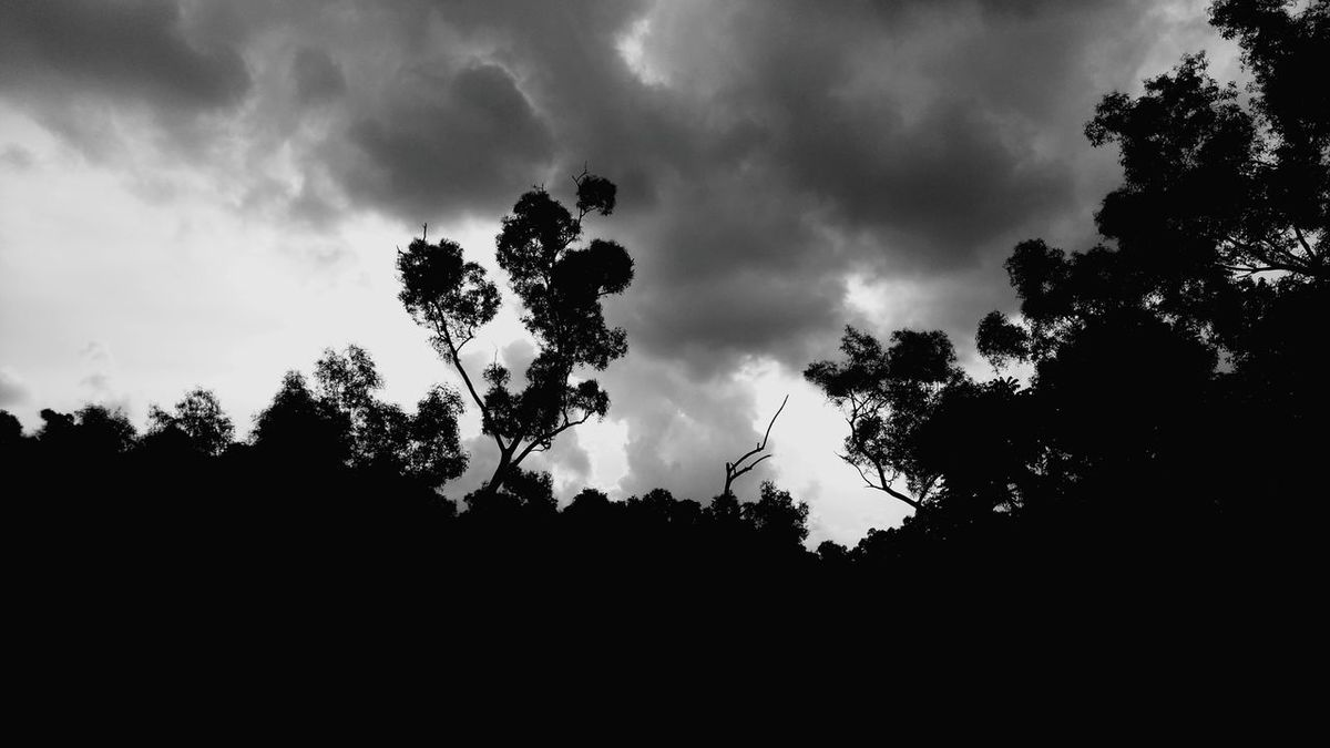 Monochrome Photography Trees Clouds High Contrast Black And White