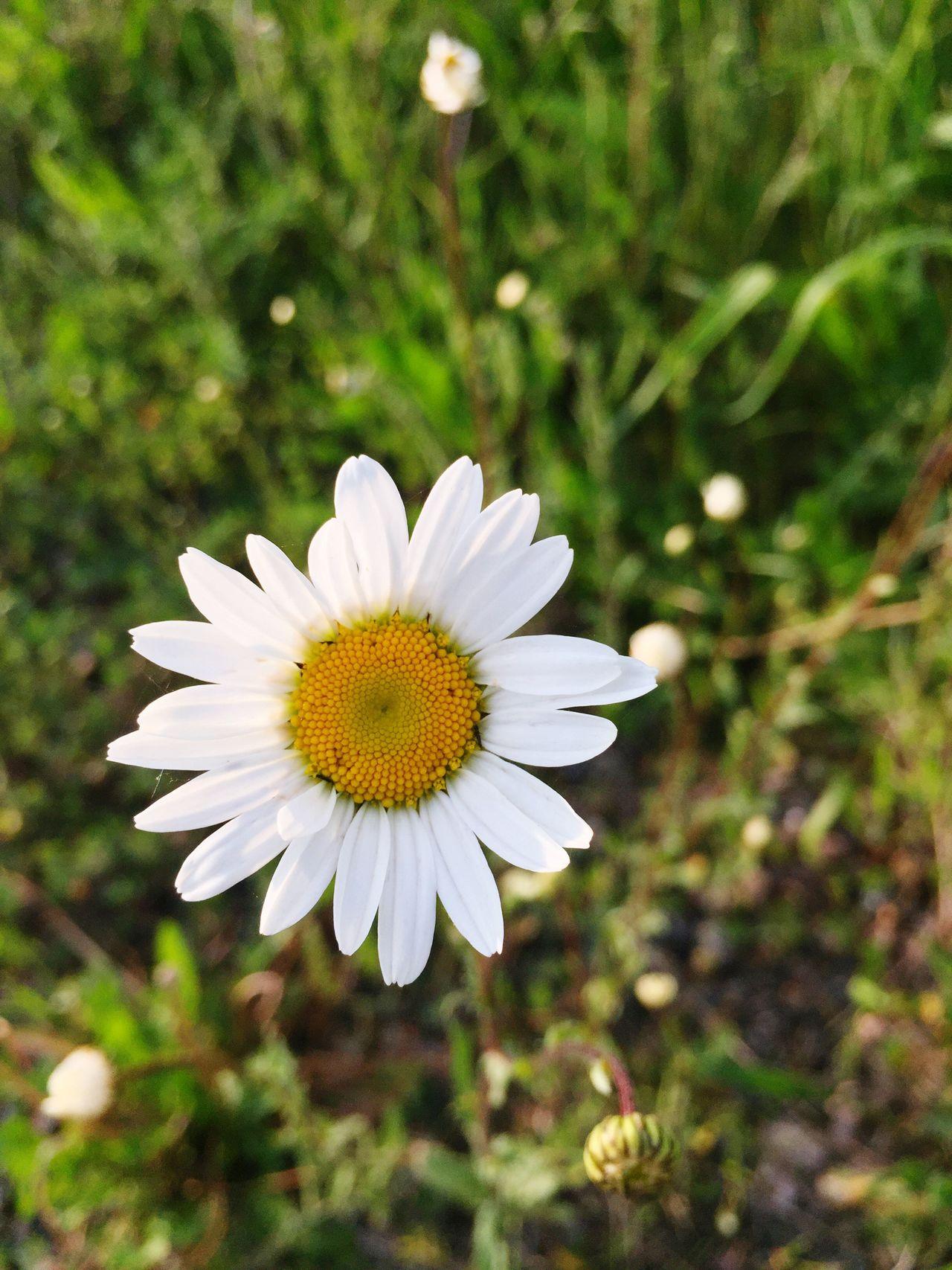 Motus Natura Flowerphotography