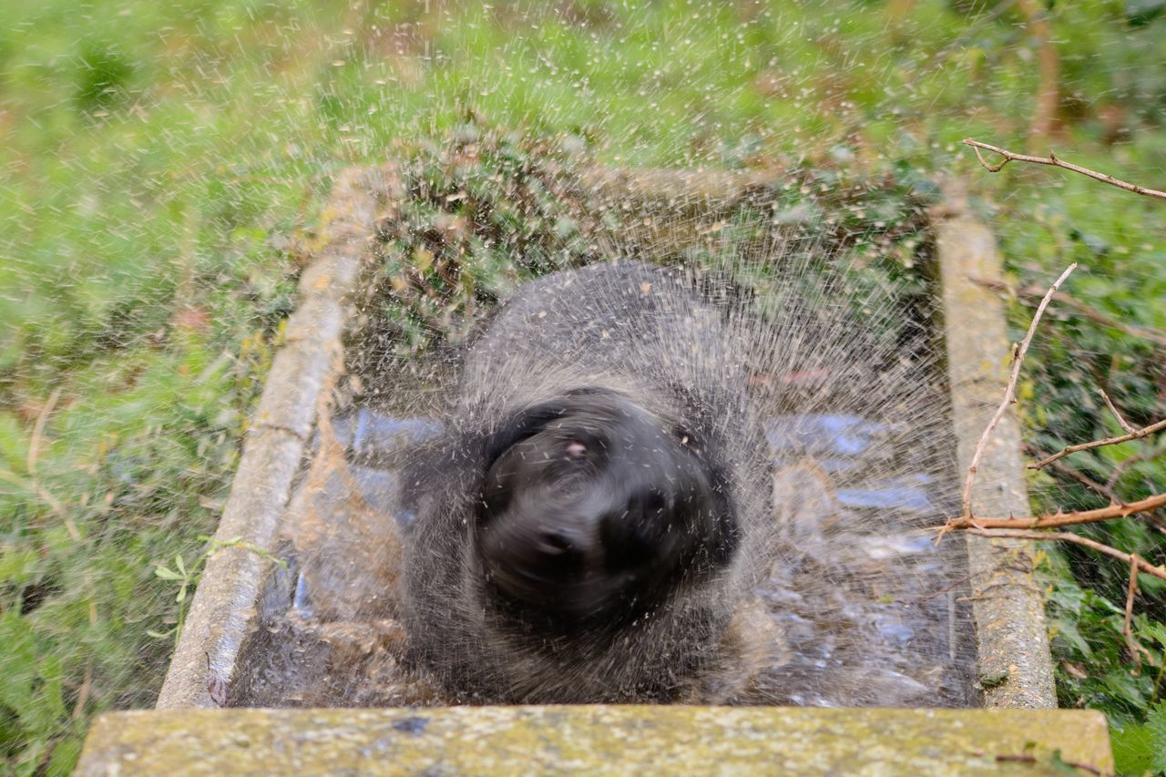 Beauty In Nature Black Labrador Blurred Motion Check This Out Close-up Day Dog Domestic Animals Enjoying Life Eye4photography  EyeEm Best Shots EyeEm Gallery EyeEm Nature Lover Labrador Mischief Motion Nature Nature_collection No People Outdoors Pets Portrait Taking Photos Water Wet