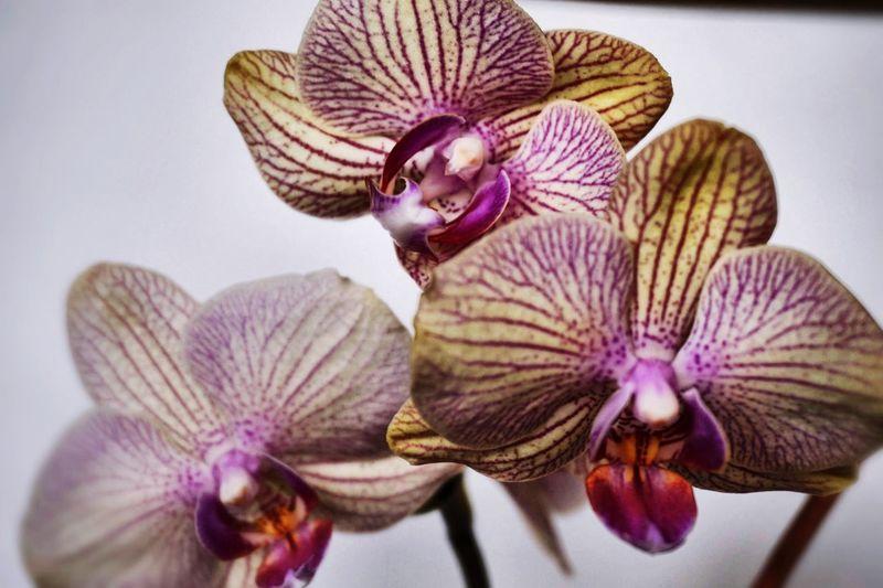 Hello World Enjoying Life Hi! I Love It ❤ Orhids Taking Photos а у меня цветочки