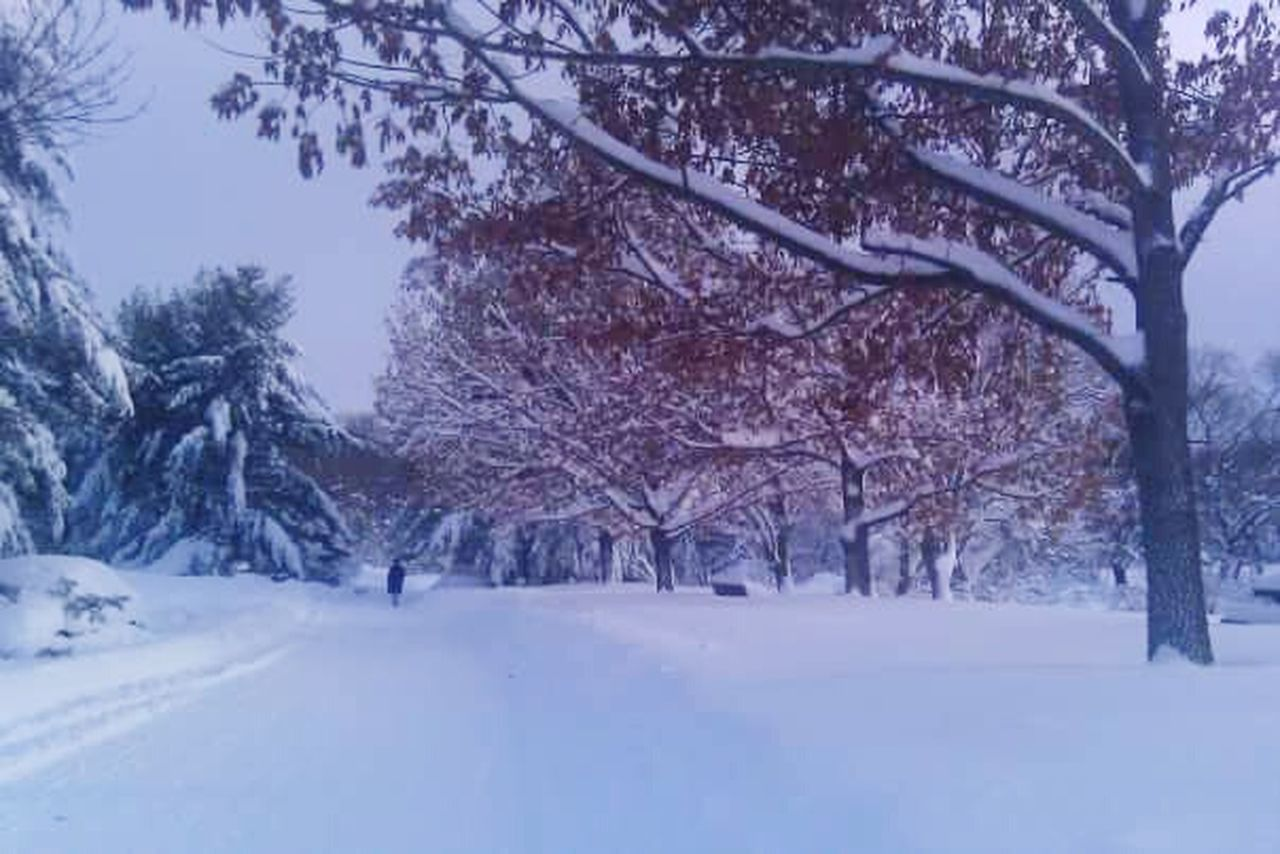 snow, winter, tree, cold temperature, nature, scenics, beauty in nature, tranquil scene, white color, outdoors, tranquility, branch, no people, landscape, day, forest, snowing, bare tree, sky