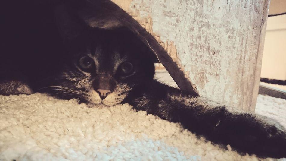 Underthetable Cat Catlove Catlovers Heart Miauuu