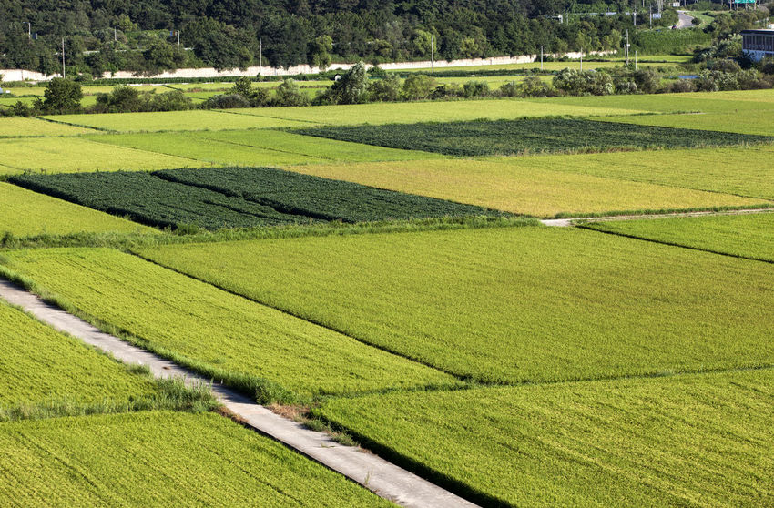 Agriculture Beauty In Nature Crop  Cultivated Cultivated Land Day Farm Field Flower Freshness Grass Green Color Hedge High Angle View Imjingak Landscape Nature Park - Man Made Space Plant Rice Field Rural Scene Scenics Springtime Tranquil Scene Tranquility