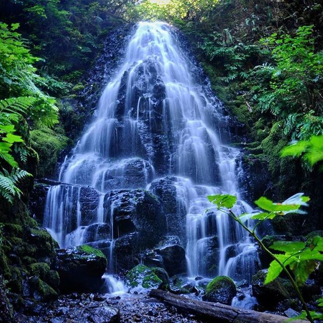 Fairy falls, Columbia river gorge. Oregon Oregonnw Waterfall Water River Cascade Columbiariver Columbiarivergorge PNW Pacificnorthwest Northwest Hiking Exploring Outdoors Fairyfalls Forest Golivexplore Explorethepnw