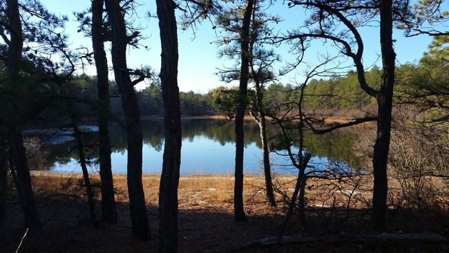 Idyllic Nature Outdoors Scenics Tranquil Scene Tranquility DECEMBER2015 Early Winter near Torrey Pond in the Pine Barren Wild Pond Pine Needles Waterfront Water Tree Sky Day Calm Beauty In Nature Tree Trunk Non-urban Scene Sunlight No People