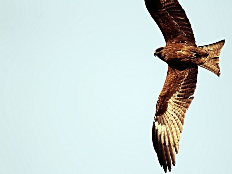 Animal Themes Bird Animal Wildlife No People Outdoors Claw Day One Animal Animal Body Part Eaglephotography
