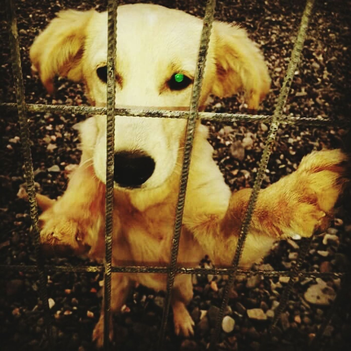 Dog❤ Love ♥ Beautiful Eyes Cage