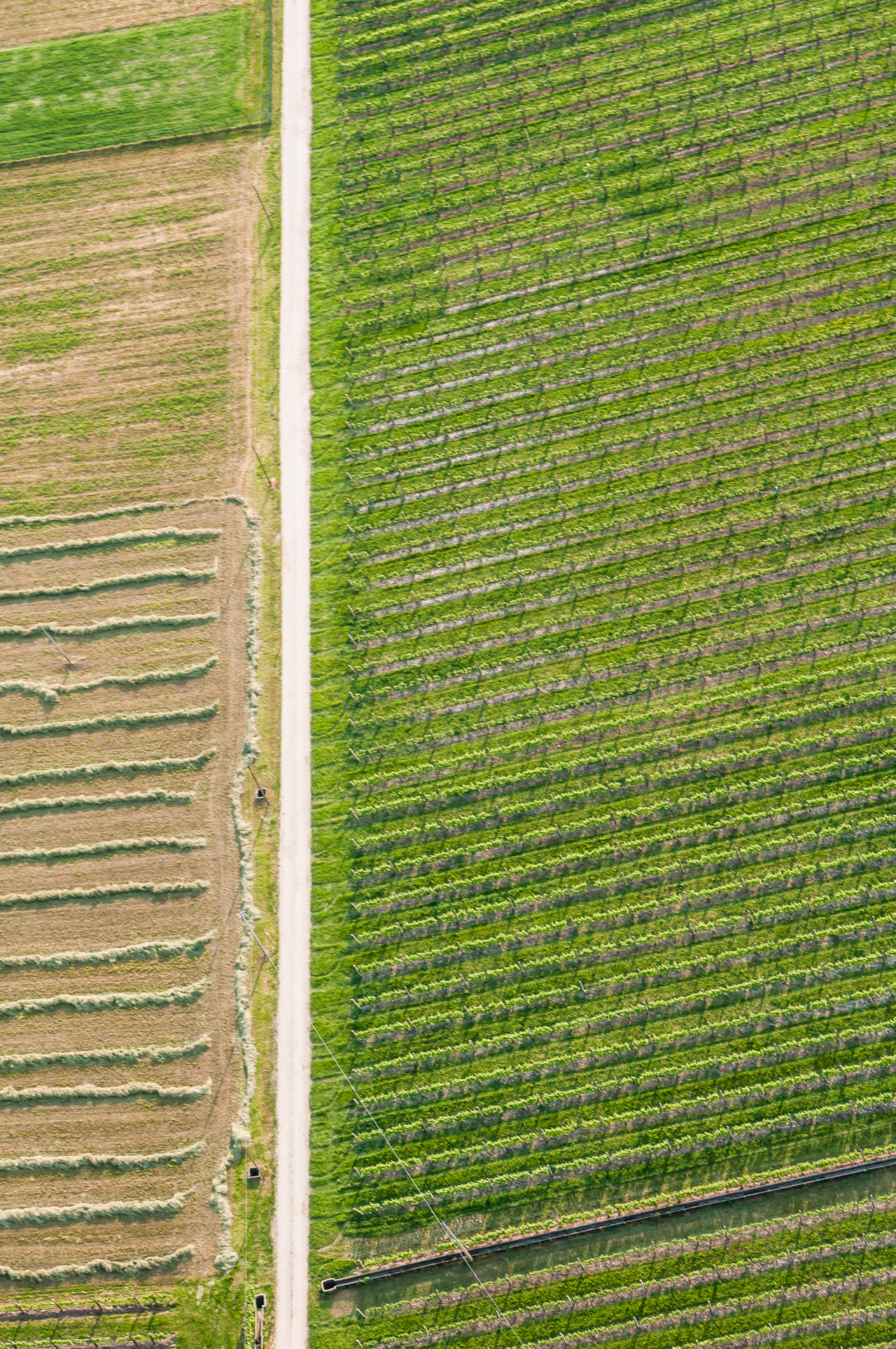 Aerial Photography Agricultural Land Agriculture Field Flying High Grass Green Green Color Italy Landscape Nature Pattern Prosecco Prosecco Land Rural Scene Veneto