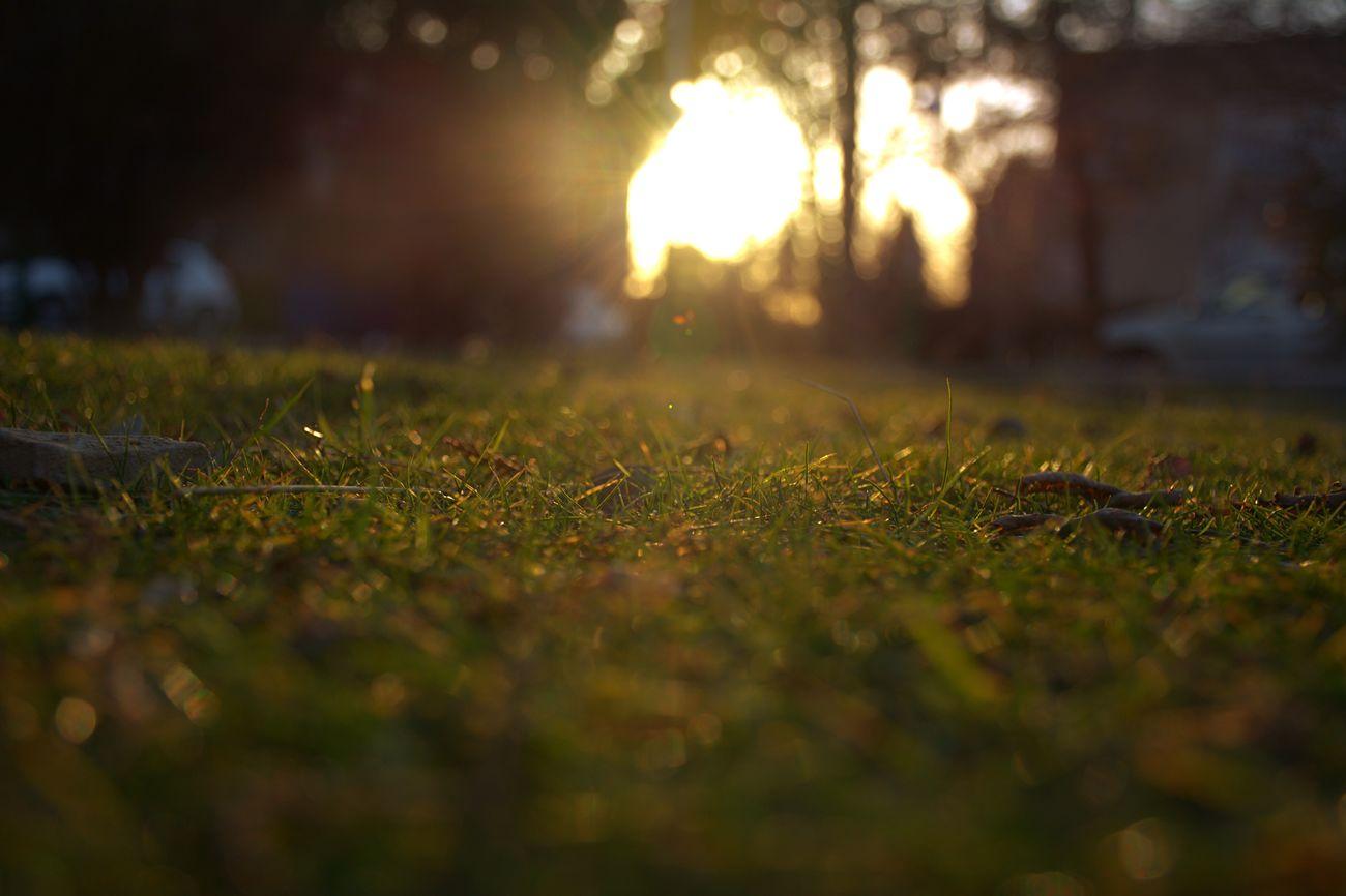 Grass Grass And Sky Grass And Sun Grassy Grassfield
