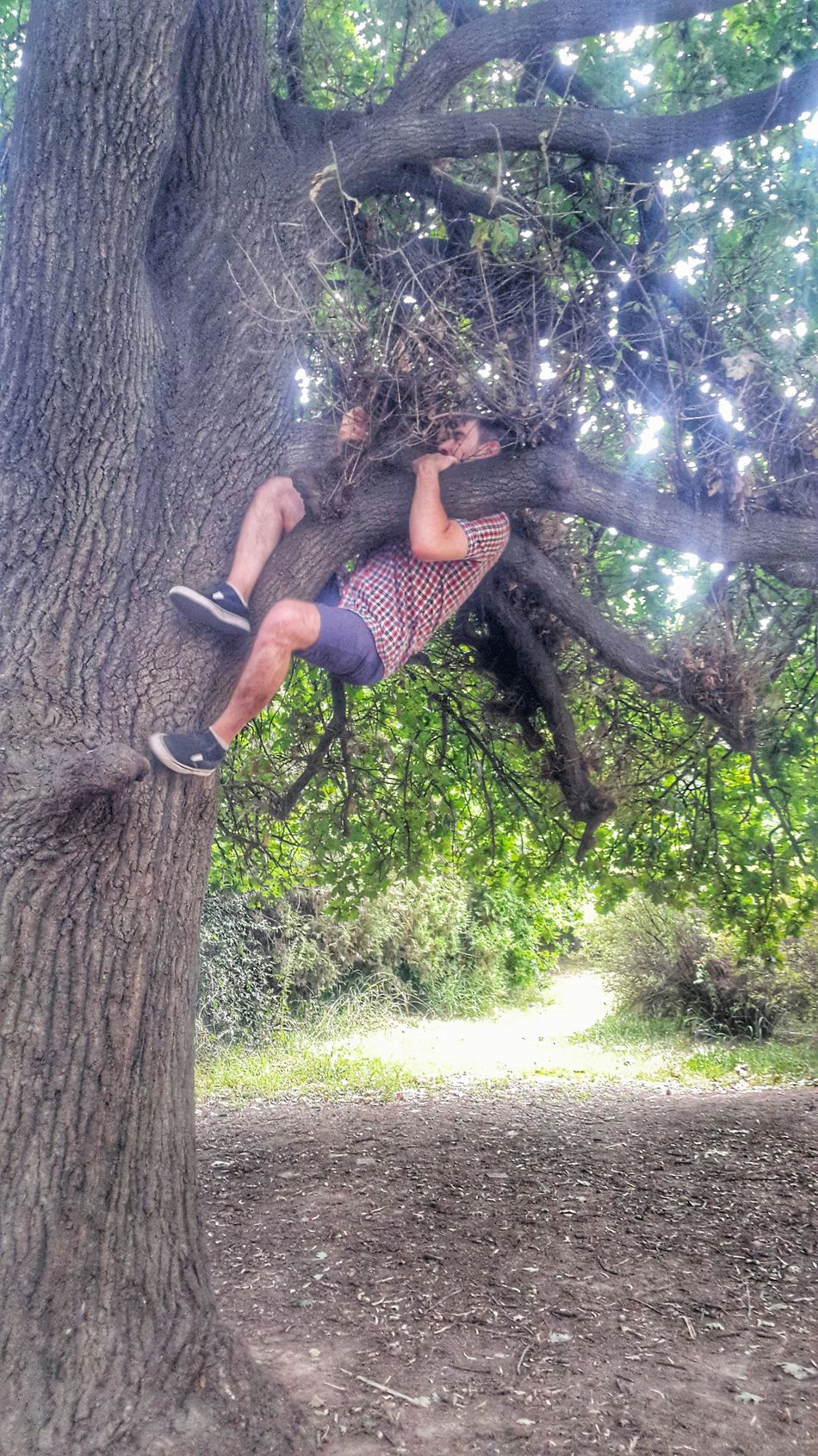 Climbing a tree part 3 EyeEm Buenos Aires Climbing Trees Climbing Climbing A Tree Street Photography Buenos Aires, Argentina  Streetphotography Street Photo People People Photography Peoplephotography Healthy Healthy Lifestyle