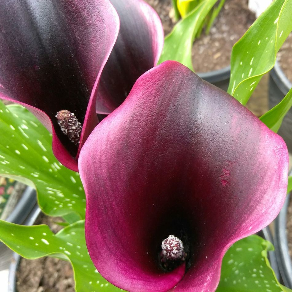 Deep Purple Plant Nature Growth Close-up Freshness Fragility Leaf Flower No People Day Outdoors Beauty In Nature Water Food Flower Head Healthy Eating