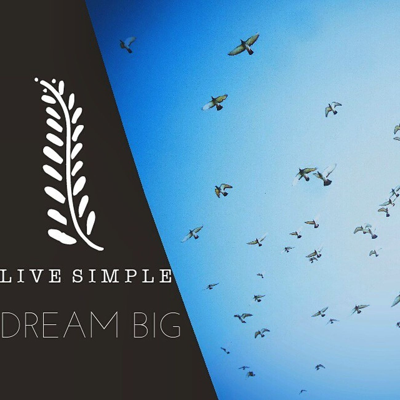 Livesimpledreambig Fly Sandeepmv 8884922253 skfotography 2014 vscocam lonelyplanet lonelyplanetindia Vscaward explore popular instafollow instalike canon TFlers 20likes instafood igers instadaily igworldcontest_2 ig_india