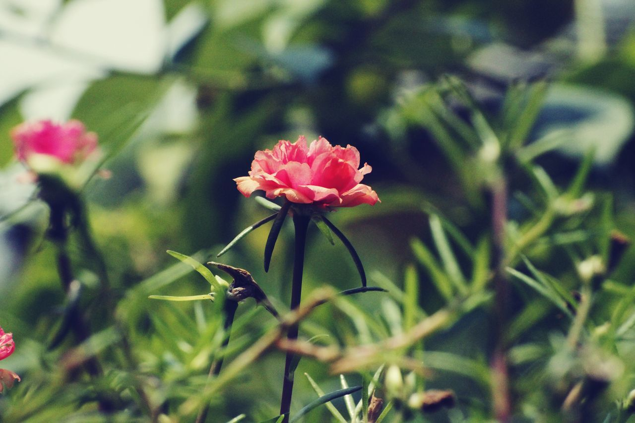 The Flower among many Flower Nature Plant Growth Beauty In Nature Fragility No People Outdoors Close-up EyeEmNewHere EyeEm Masterclass EyeEm Best Shots Eyeemphotography EyeEmGalley Macro Photography