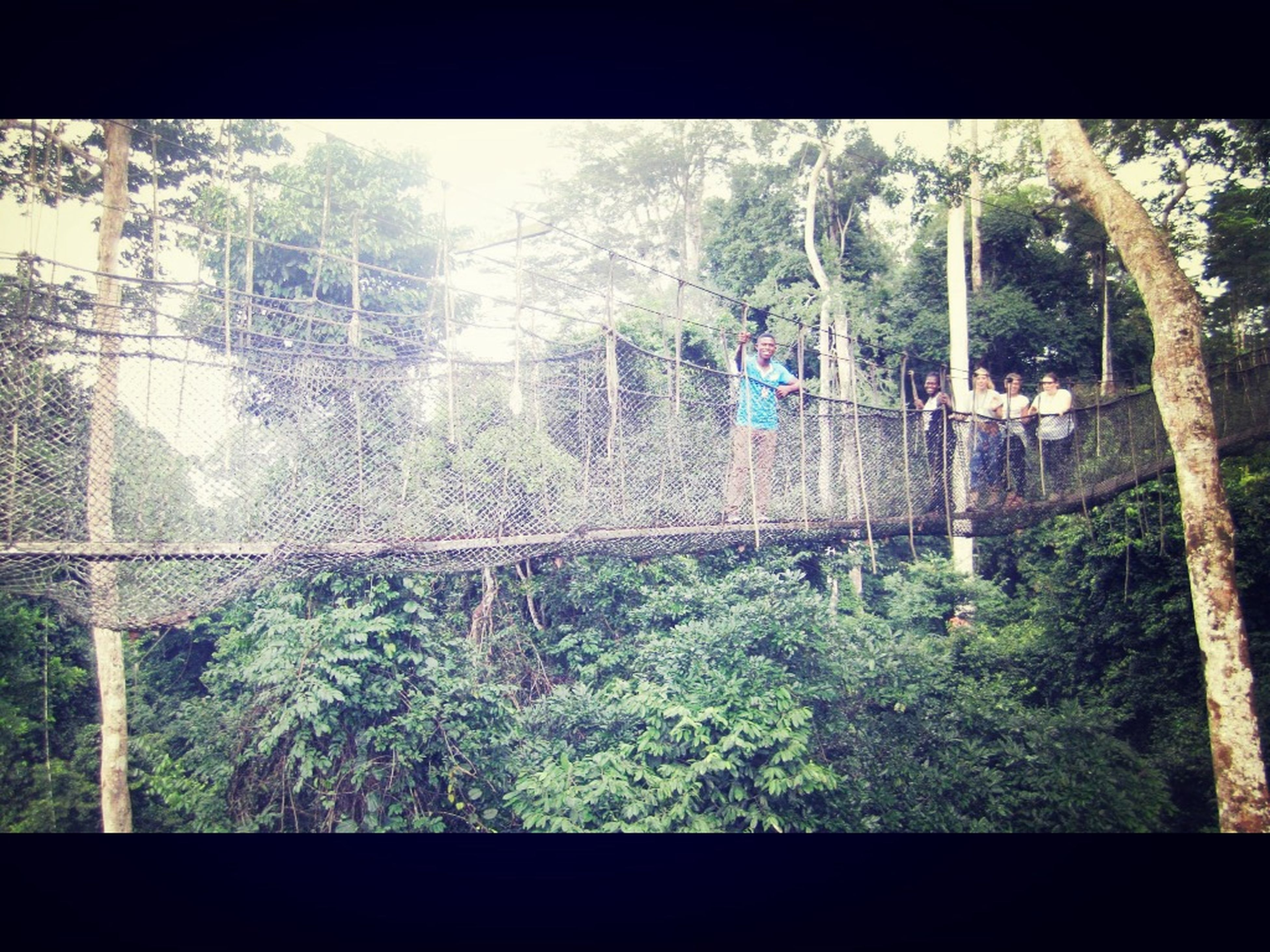 Tree canopy walk so lush Hanging Out Hello World Check This Out Green