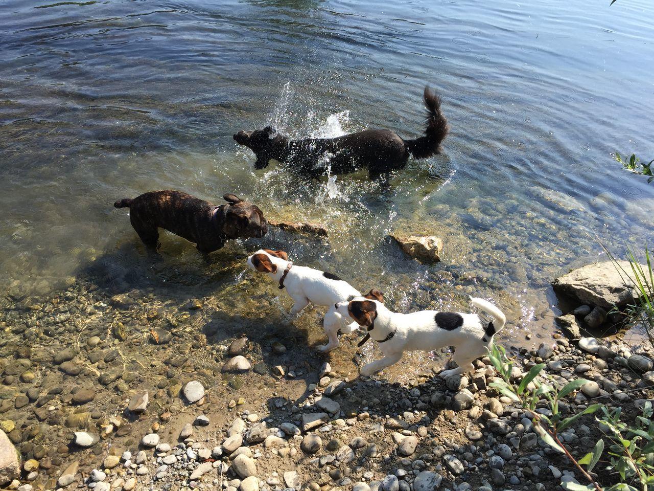 Frenchbulldog Pet Photography  Pet Cute Pets French Bulldog Pets Animal Jack Russell Dogs Dog