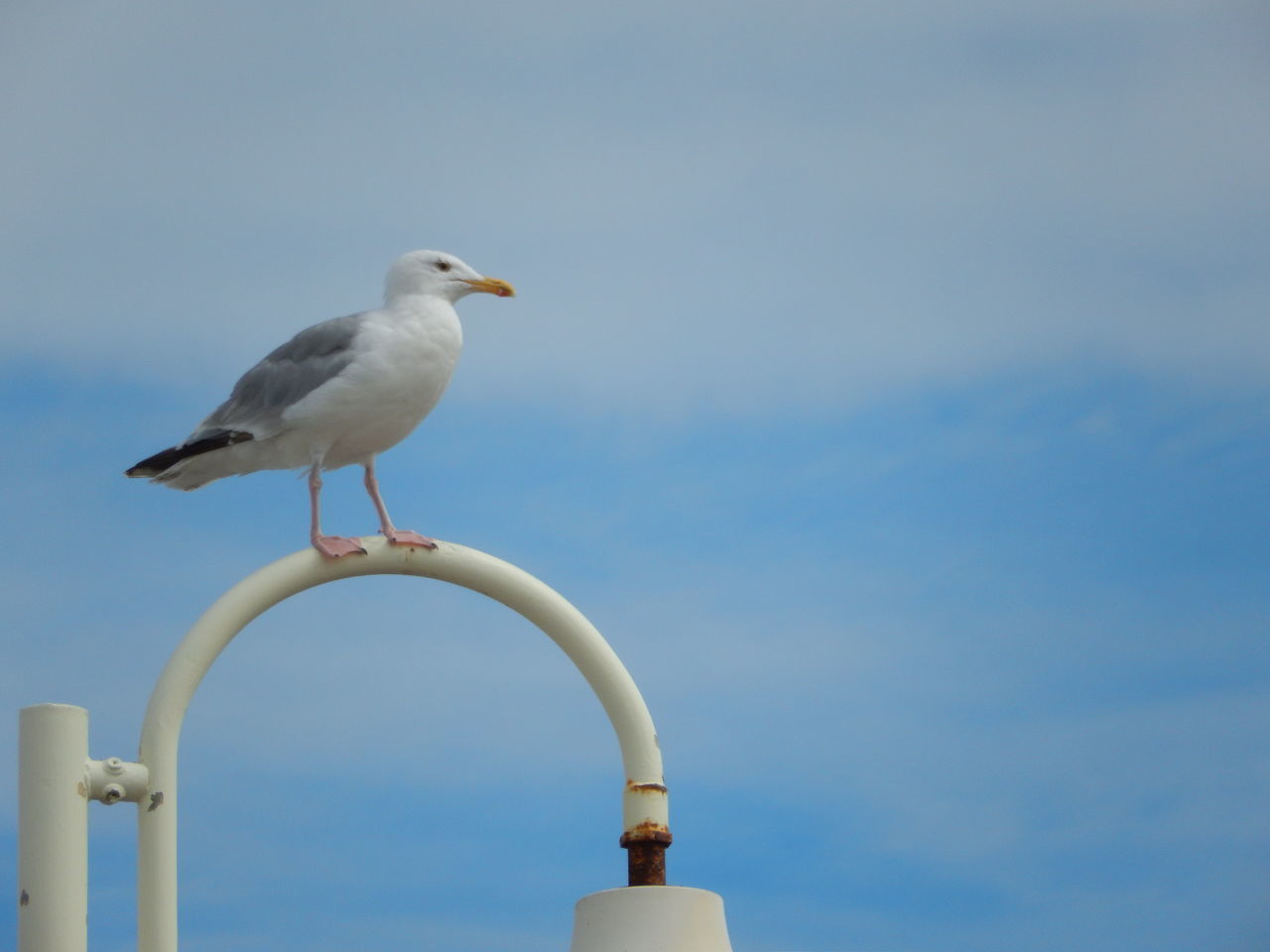 A seagull sitting on a lamp by the sea. Bird Clouds Day Nature No People One Animal Outdoors Perching Seagull Seagull On Lamp Seaside Sky
