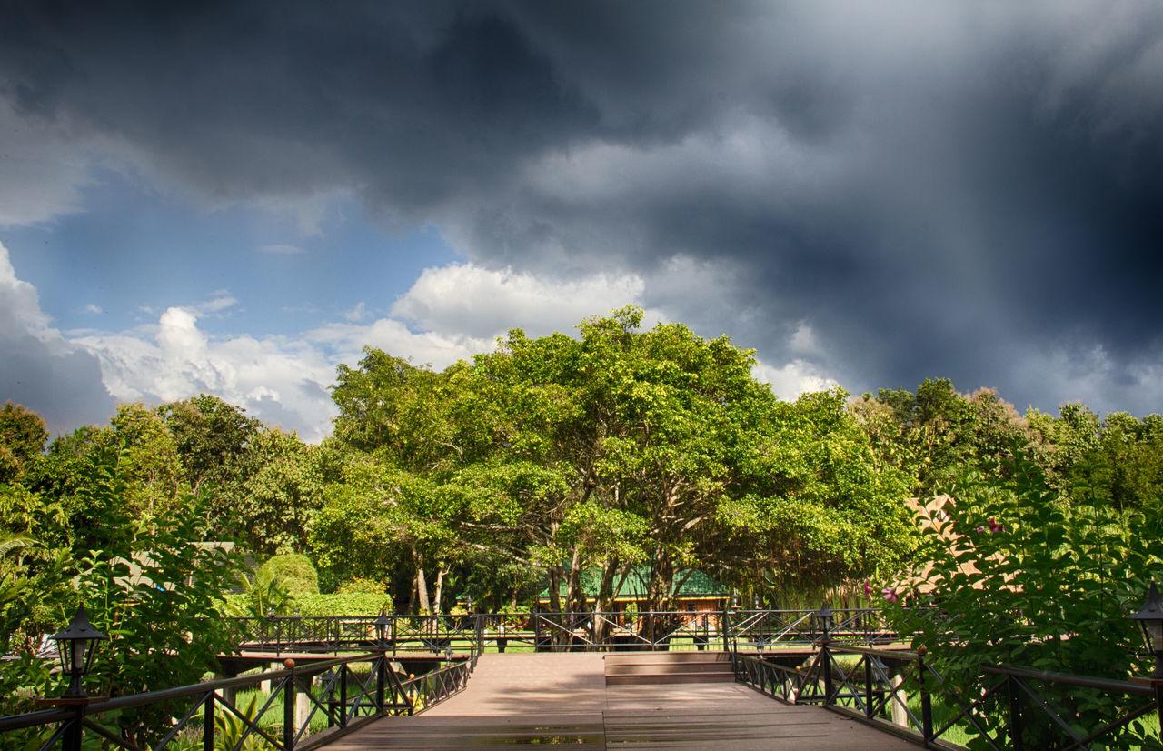 Huai Hongkhrai - chiang mai thailand Big Trees Cloudy Dark Green Color HDR Nature Rain Sky Stom Walk Way Wood