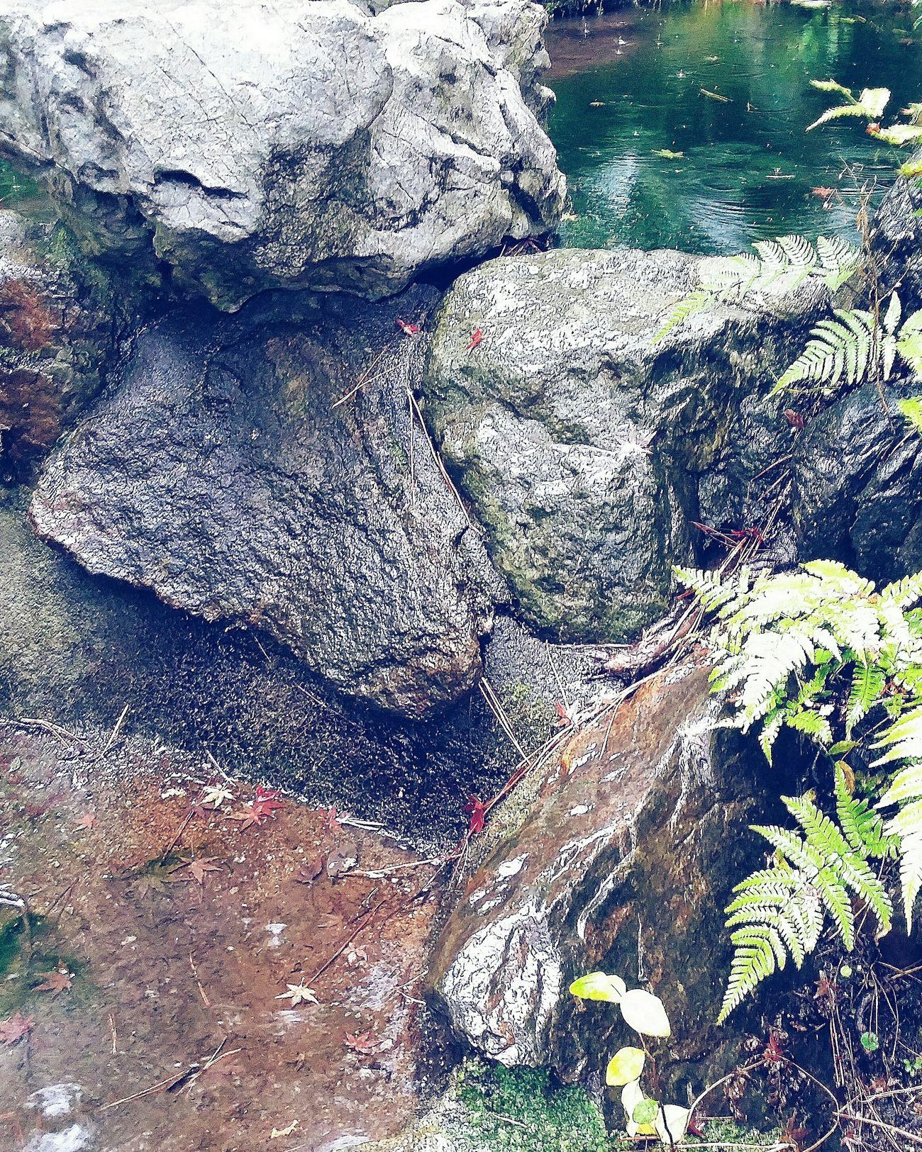 Landscape Garden Tokyonature Urbannature Rocks Ferns Pond Nature Naturelover Naturecollection Naturephotography Tokyo Autumn 2015 Autumn 2015 秋 Tonogayato Teien Place Of Scenic Beauty Tokyo Japan Travel Photography