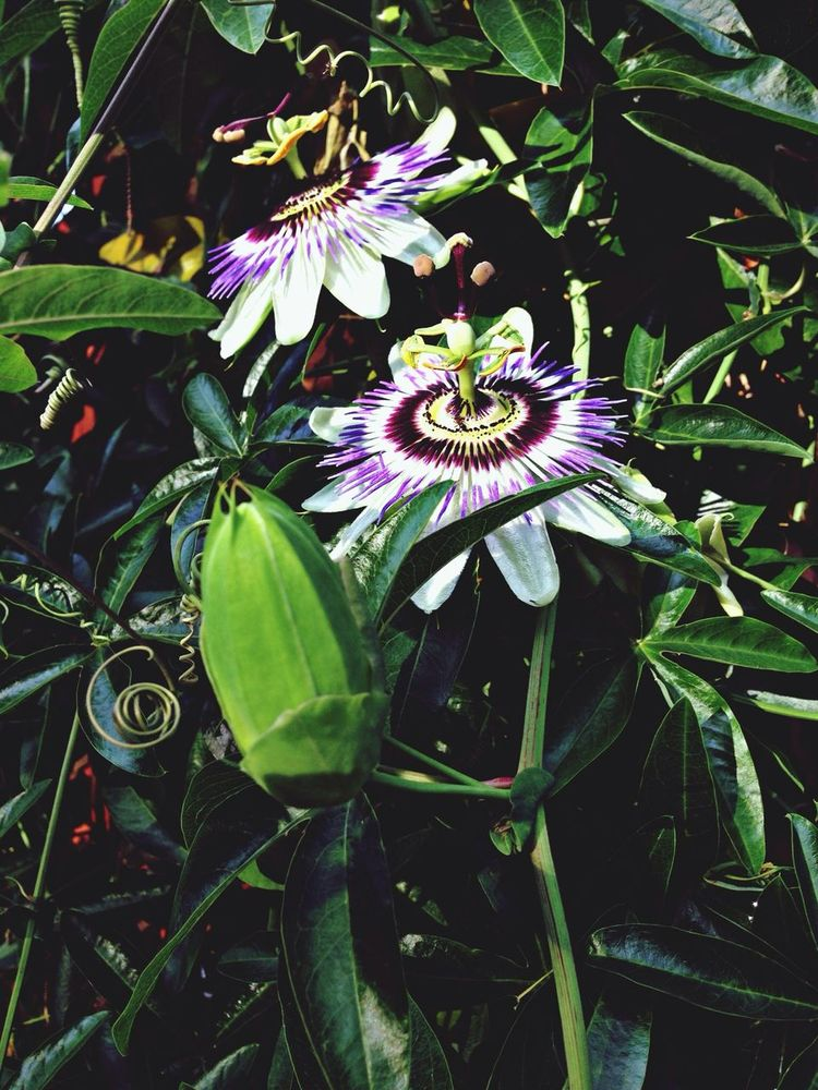 Beauty Flowers Nature Artistic Photo
