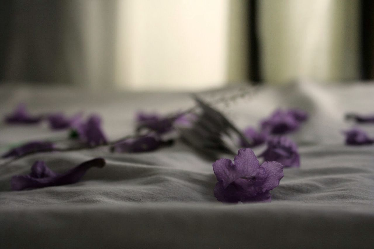 Beautiful stock photos of engagement, Bed, Close-Up, Fallen, Flower