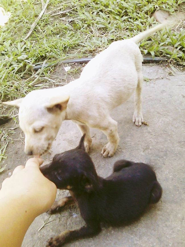 My Doggie...Love yaa...