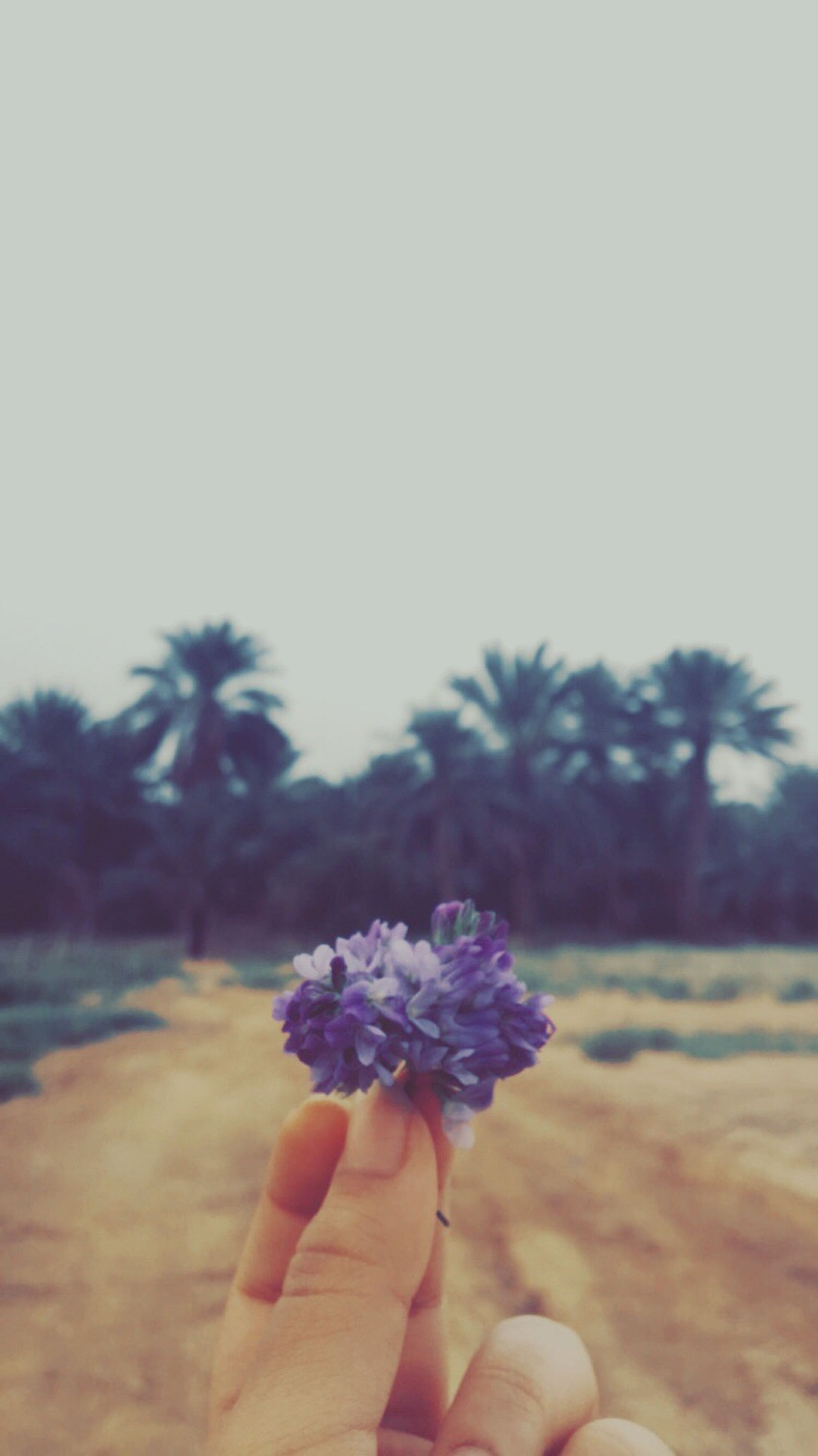 flower, human hand, one person, holding, human body part, nature, focus on foreground, fragility, flower head, real people, freshness, outdoors, close-up, beauty in nature, growth, day, leisure activity, sky