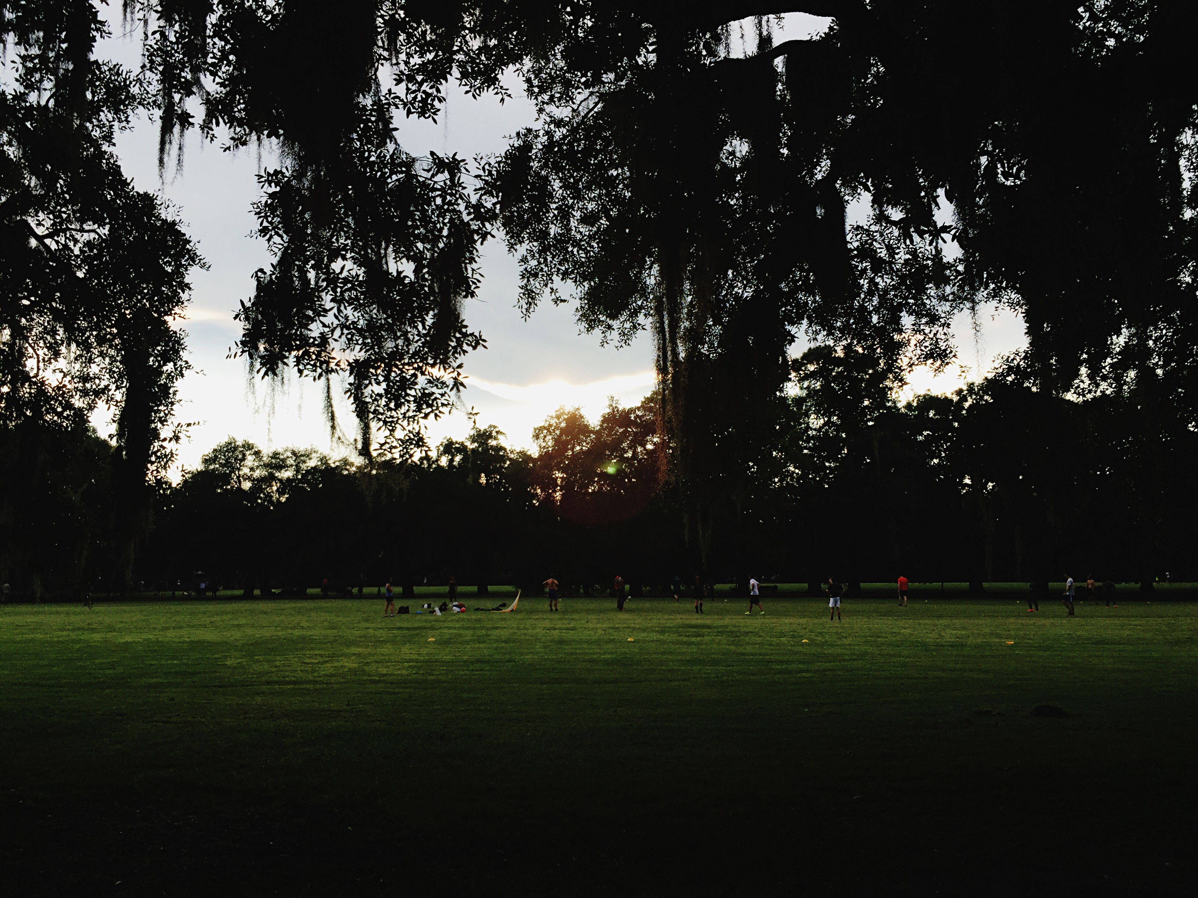 tree, grass, large group of people, park - man made space, green color, tranquility, tranquil scene, growth, nature, sky, beauty in nature, lawn, park, outdoors, scenics, green, remote, grassland