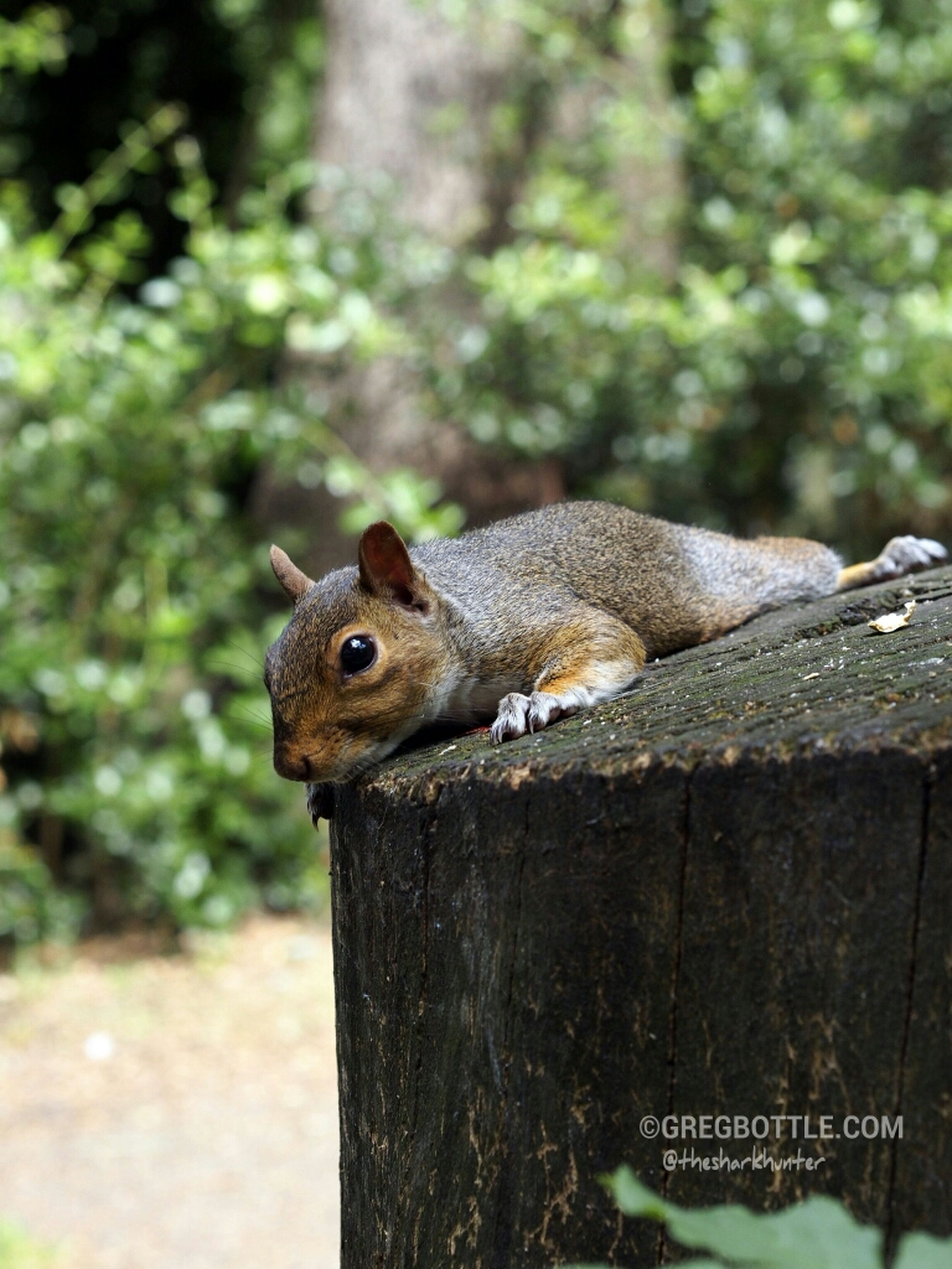 animal themes, one animal, animals in the wild, focus on foreground, wildlife, tree, wood - material, squirrel, tree trunk, close-up, bird, day, nature, outdoors, perching, side view, branch, no people, wood, full length
