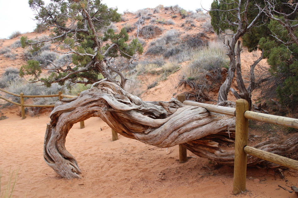 Arches National Park Arid Climate Beauty In Nature Branch Close-up Day Nature No People Outdoors Textured  Tree