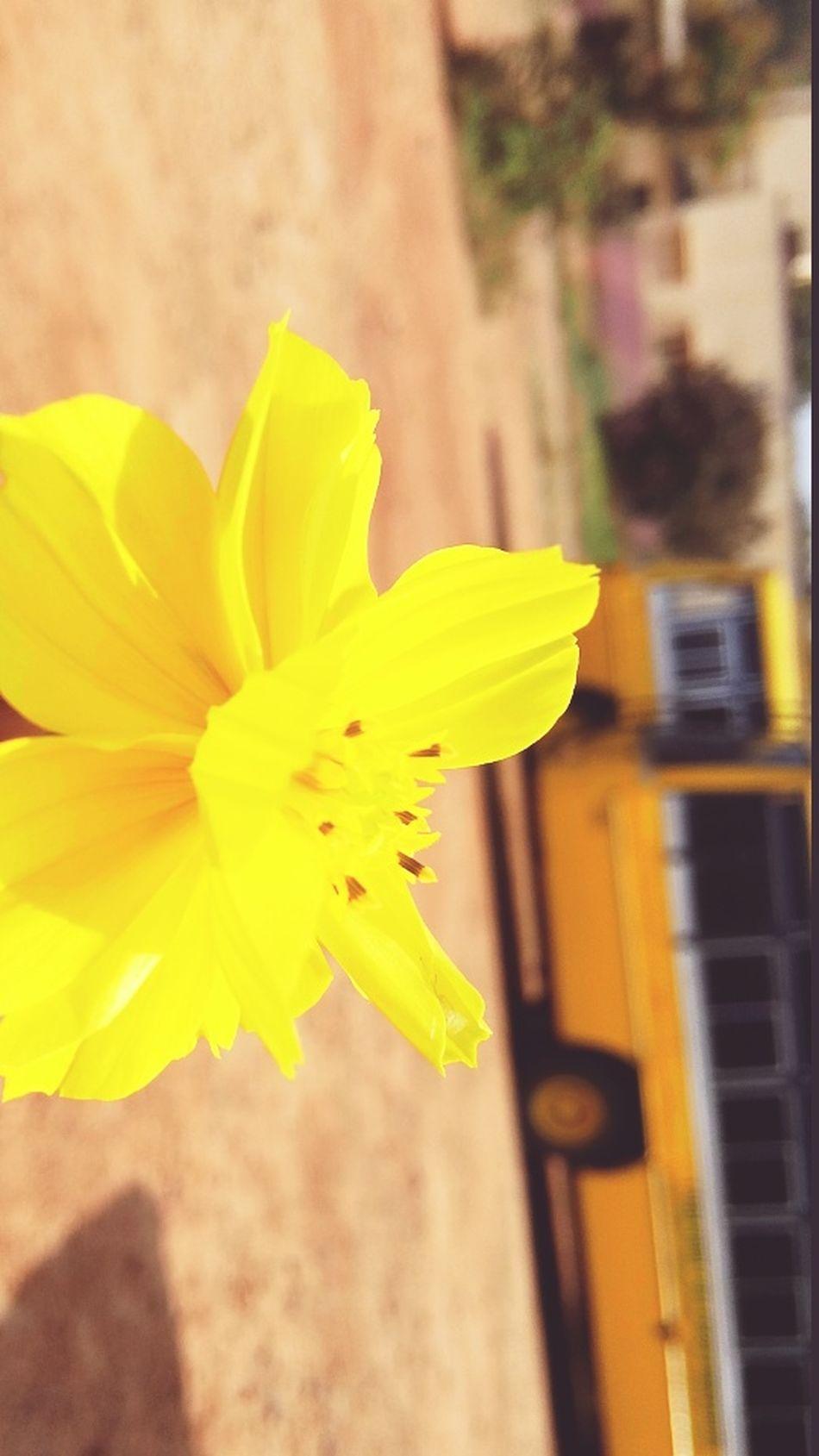 Love ♥ Photoshoot Flowerpower Soaking It All In