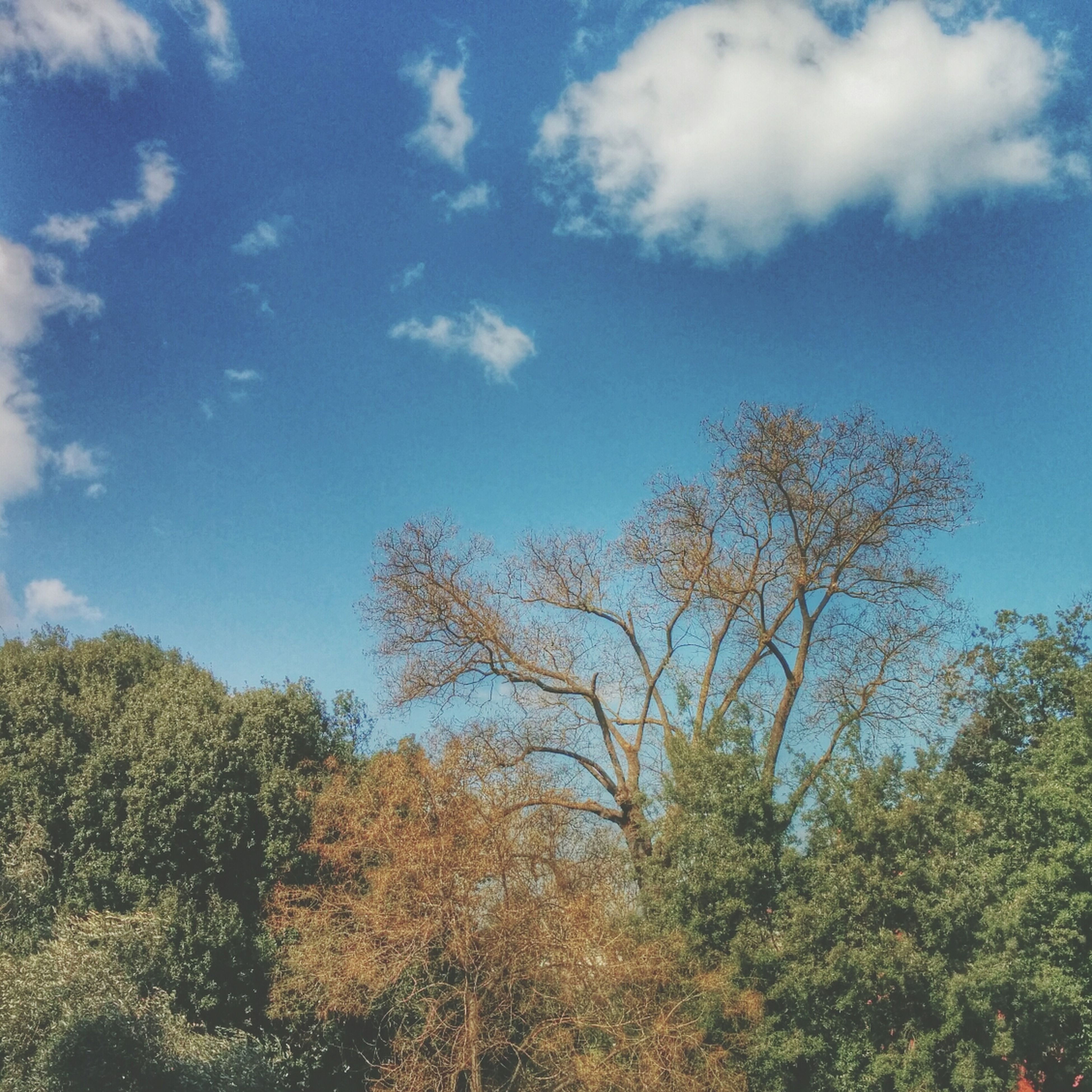 tree, sky, tranquility, growth, low angle view, blue, tranquil scene, beauty in nature, nature, cloud - sky, scenics, cloud, green color, branch, day, outdoors, no people, idyllic, non-urban scene, sunlight