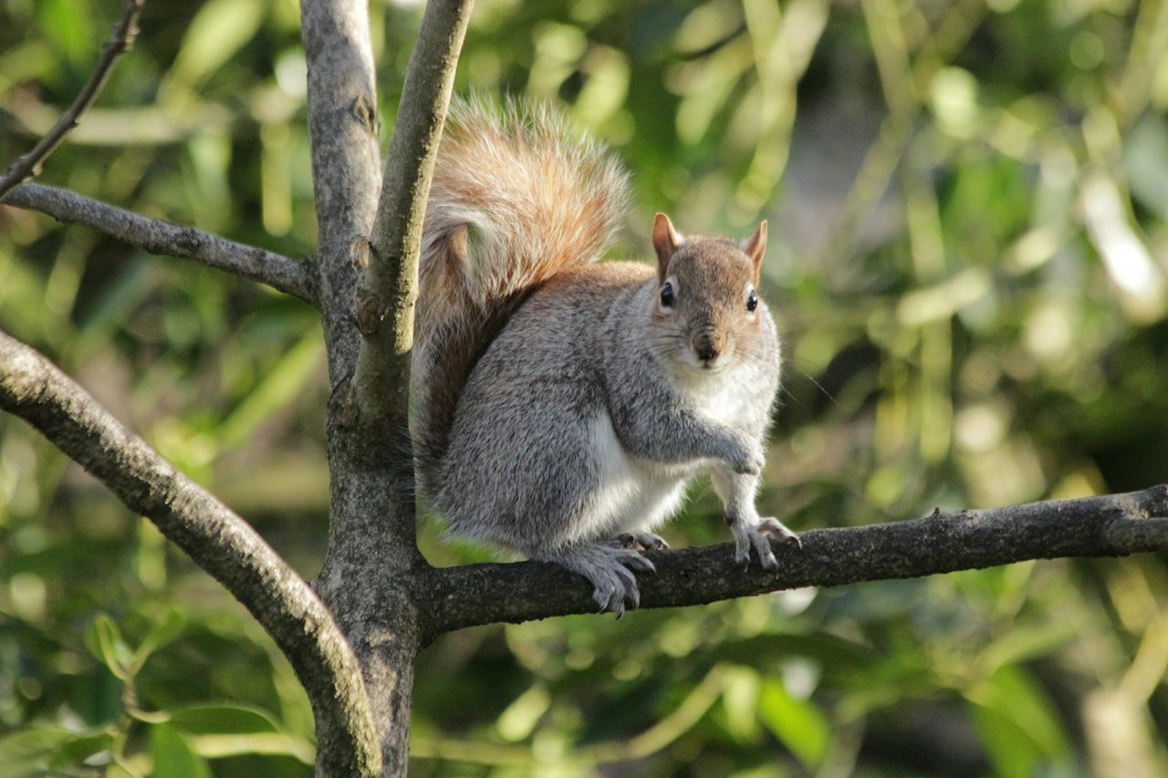 Beautiful stock photos of squirrel, Alertness, Animal Nose, Animal Themes, Animals In The Wild