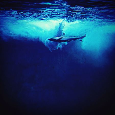 Looks like I'm diving in the ocean. Actually I'm in an acqurium Shark Fish Waterreflections  Water