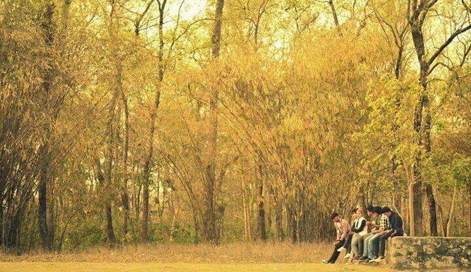 Friendsforlife Gathering Day Golden Afternoon Gossiptime Jokes Mobilephotography Bamboo Forest Eyeem Nepal