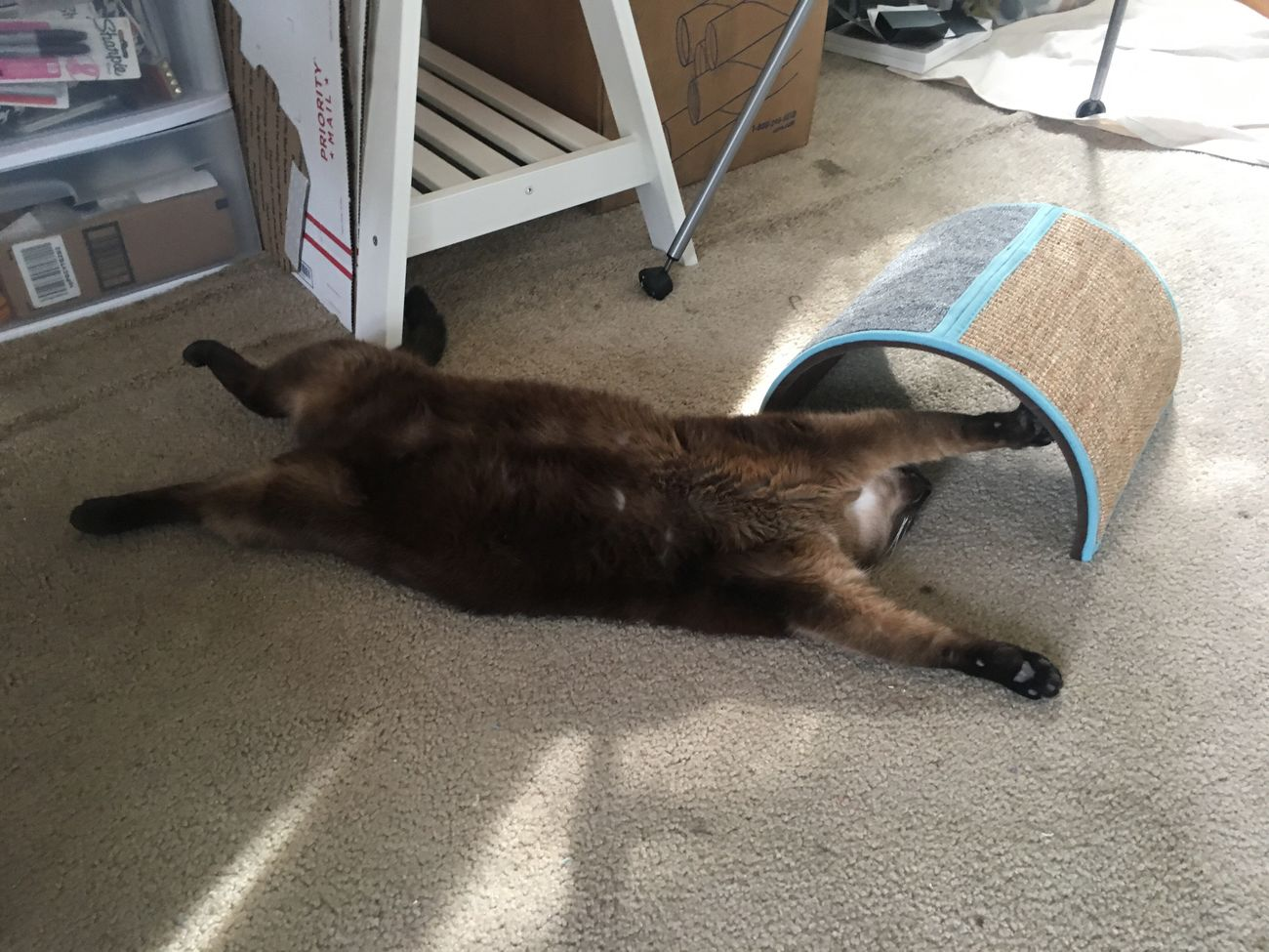 Pets One Animal Domestic Animals Animal Themes Mammal Domestic Cat Lying Down Dog Cat Indoors  No People Home Interior Feline Day Siamese Cat Stretching Cats Lazy Day Lazy Relaxed Relaxing Sunbathing Sleeping Lolcat Funny