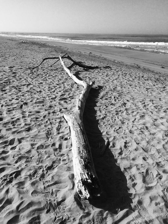 Alone Alonetime Arrow Beach Black & White Landscapes With WhiteWall A Moment Of Zen... Desert Lanscape Of Italy Monocrome Nature Sand Sea Solitude Symbolism Tranquility Water Learn & Shoot: Balancing Elements Inspired Eyeem Nature EyeEm Nature Lover Fregene Tree Art IPhone IPhoneography