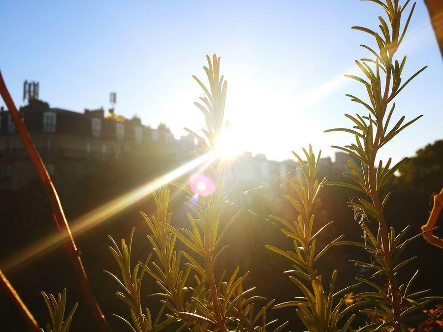 Fall Beauty Mountain Flowers Liberty Plantes Fleurs Sky Sun Soleil Hot Afternoon
