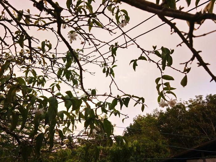 Tree No People The Week On EyeEm Clear Sky