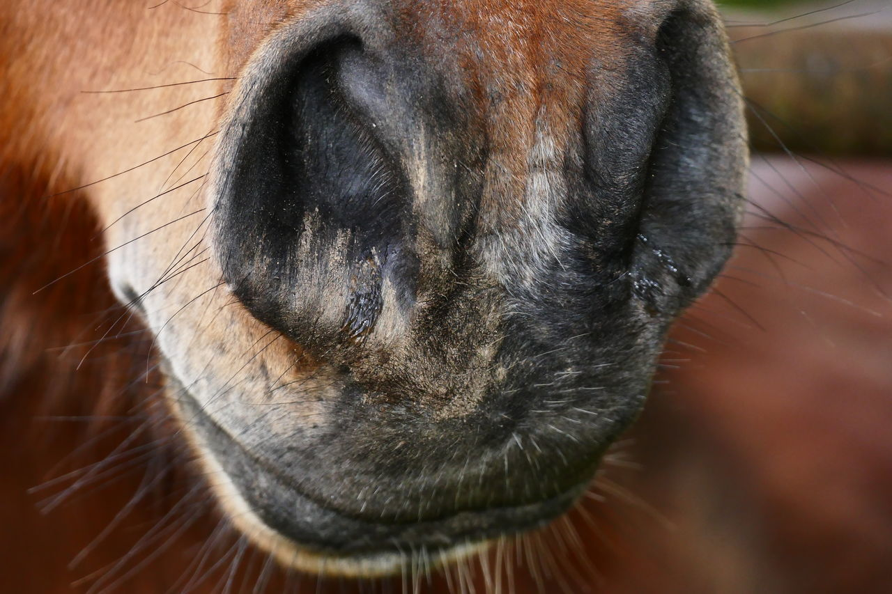 one animal, domestic animals, animal themes, mammal, pets, close-up, animal head, dog, no people, focus on foreground, day, animal nose, indoors