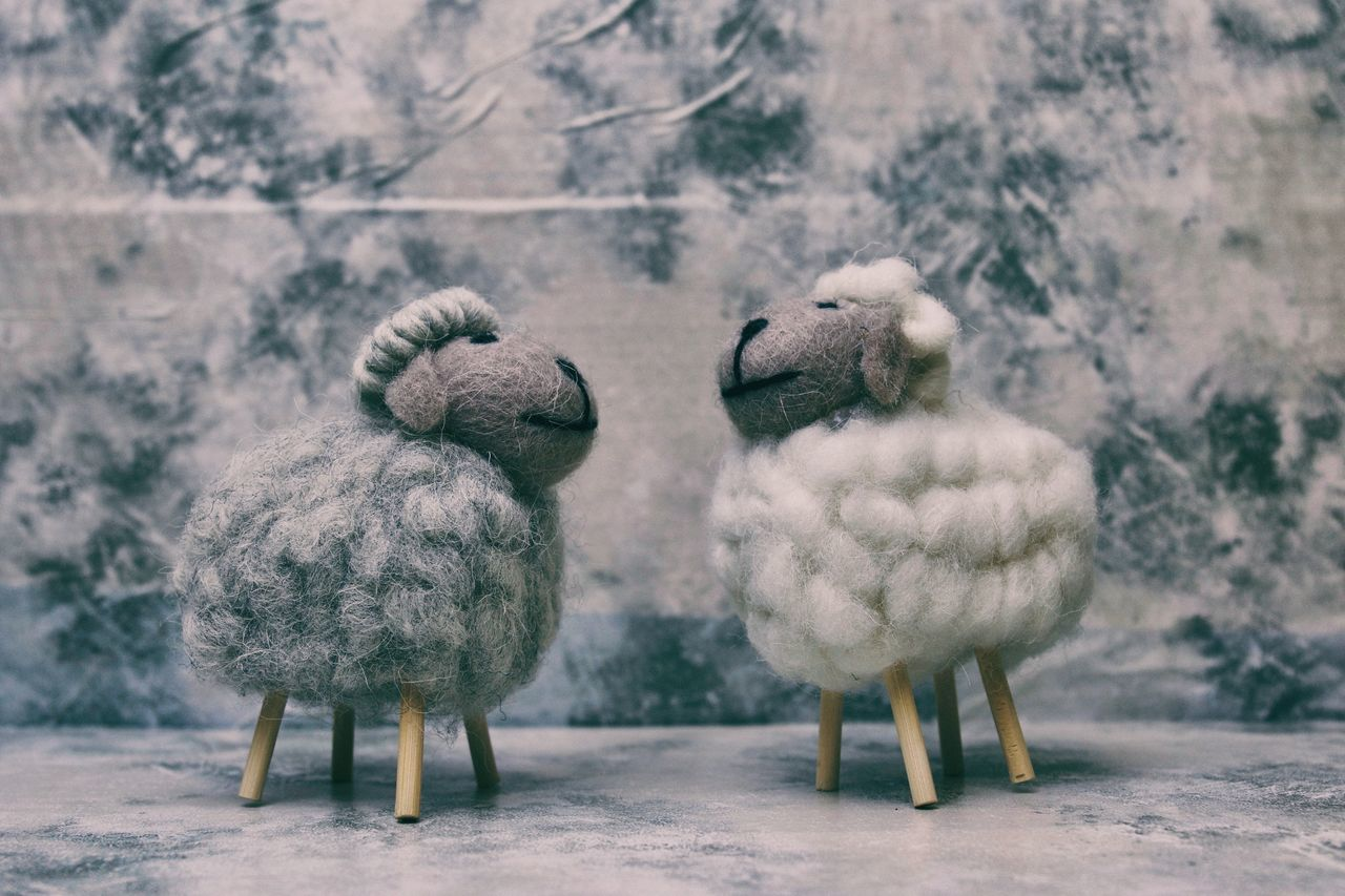Don't be a sheep Animal Themes Animal Wildlife Animals In The Wild Beauty In Nature Cold Temperature Domestic Animals Don't Be A Sheep Livestock Nature Outdoors Perching Sheep Sheeps Sheep🐑 Snow Snowing Winter Wool EyeEm Selects