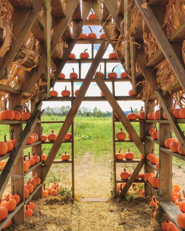 Pumpkin season. Outdoors Grass Nature The Week On EyeEm No People Built Structure Pumpkin Fall Autumn