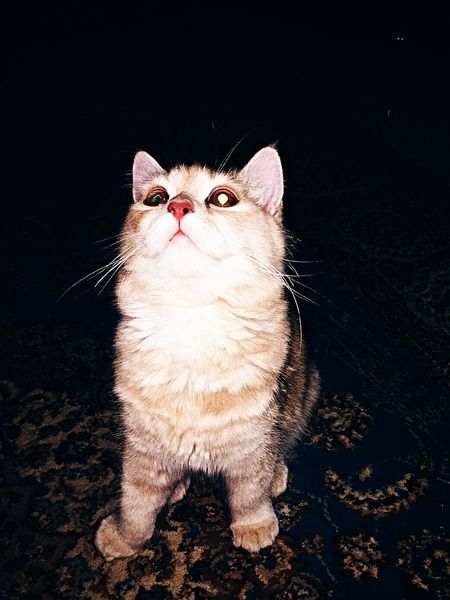 My baby ♡ Cat Random Animals Pet Taking Photos Check This Out IDK Love