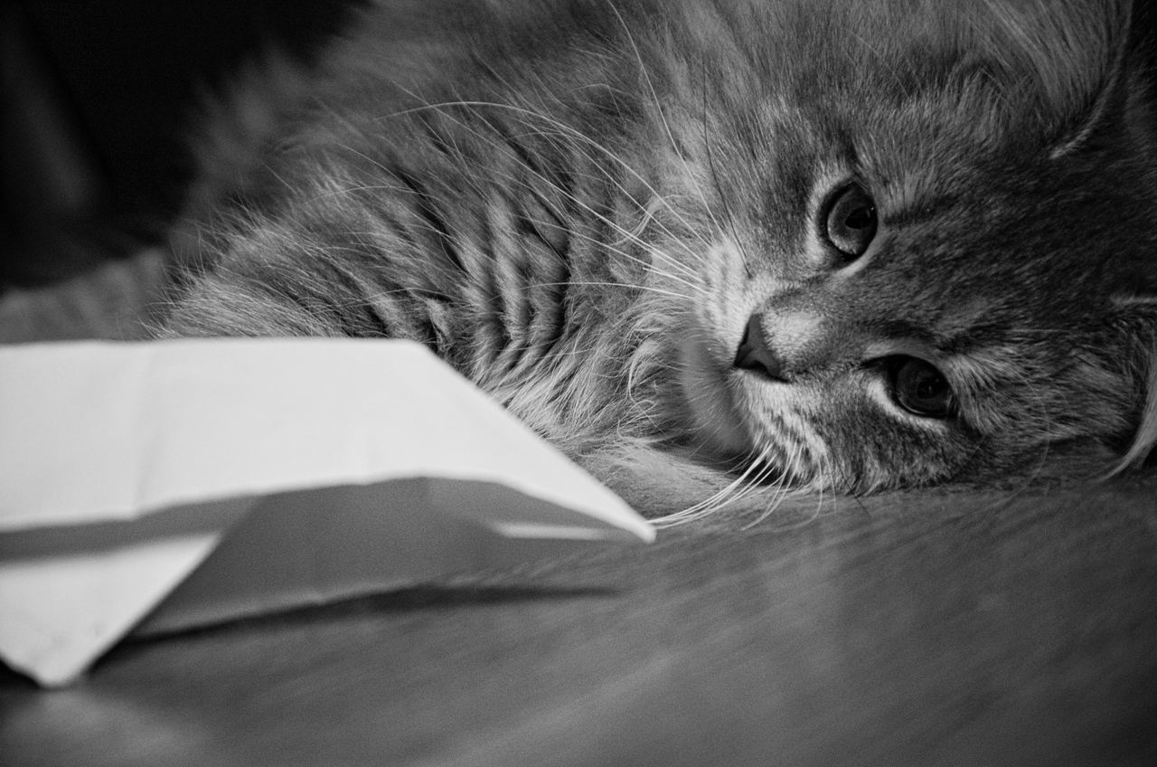 Portrait Of Cat Resting With Paper Boat On Floor
