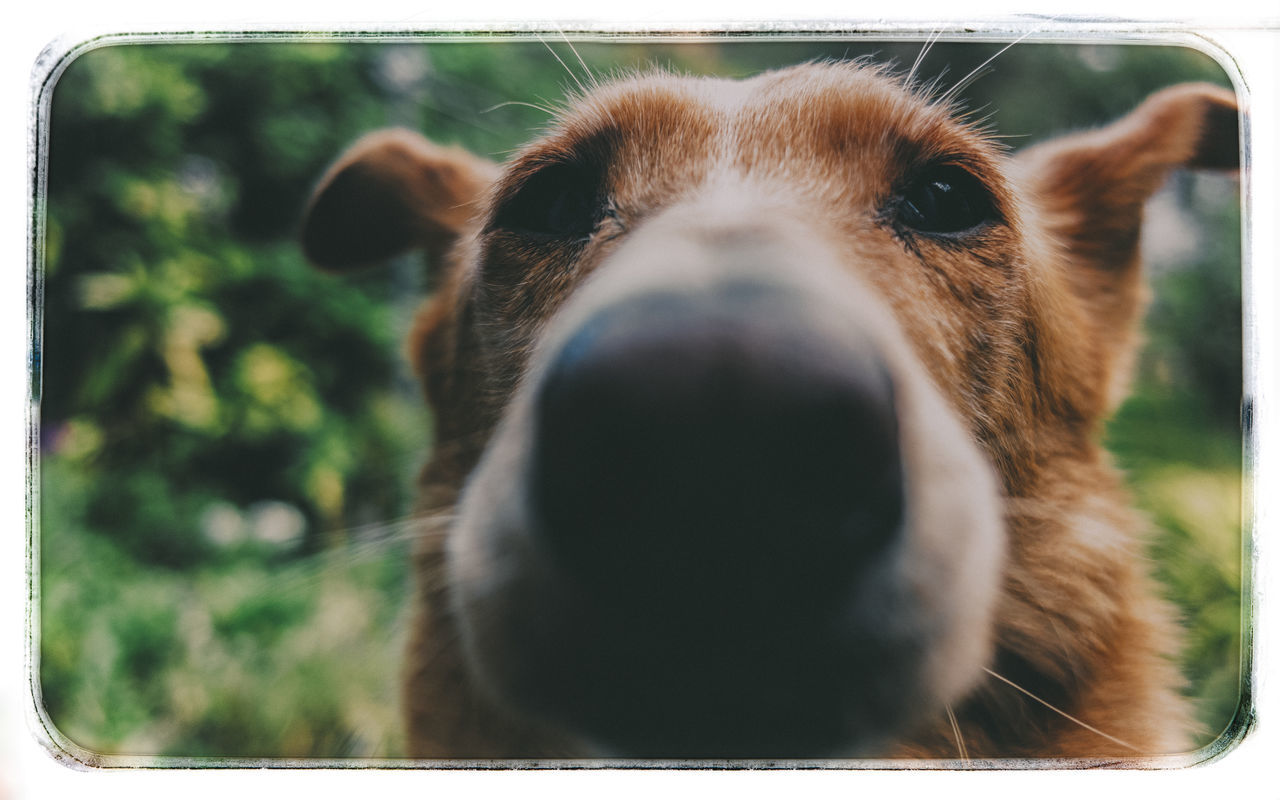 one animal, animal themes, animal head, close-up, mammal, no people, domestic animals, portrait, looking at camera, focus on foreground, day, outdoors, animals in the wild, nature