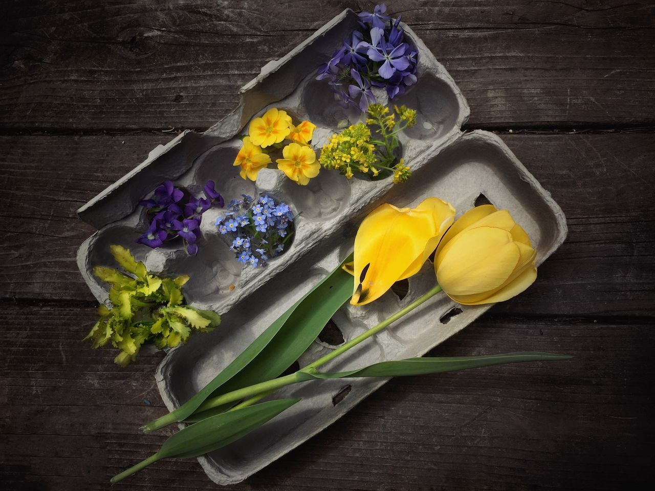 Crate of Colors Flower High Angle View No People Yellow Studio Shot Close-up Flower Head Freshness Colorful Beauty In Nature Still Life Petal Fragility Tree Trunk Egg Crate Spring Flowers Tulips