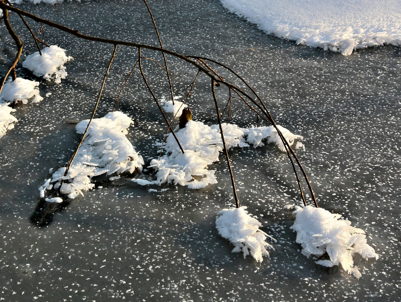 Branch Bright Frozen Lake Ice Ice Cristal Lake Outdoors Snow Snowflakes Sunshine Twigs Winter Wintertime